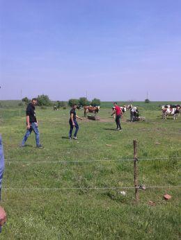 Ферма - ПГСС Дунавска земя - Ковачица, Лом